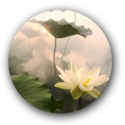 Fragrance of the Lotus